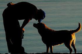 Pas je čovjekovo ogledalo