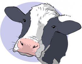 Koliko životinja pojedemo tokom života?