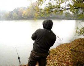 Ribe na izvolte (video)