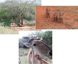 Čudesni Serengeti u 4K ultra HD