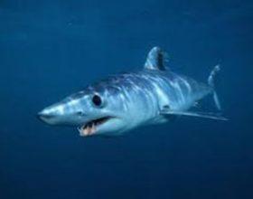 Kažnjen zbog plivanja s morskim psima