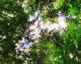 Unosan biznis na bosanskim šumama