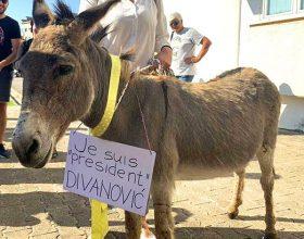 'Kuća životinja' upozorila: U Budvi zloupotrijebljen magarac