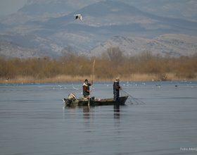 Ribe čuvaju na osnovu podataka starih četiri decenije