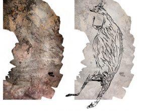 Kengur davno nacrtan (video)