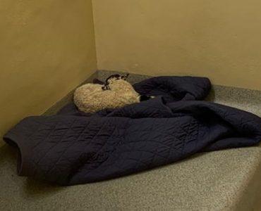 Jagnje prenoćilo u zatvoru