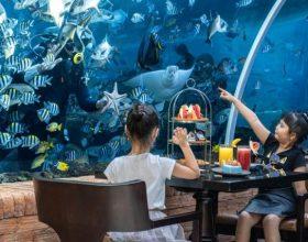Restoran u koralnom grebenu